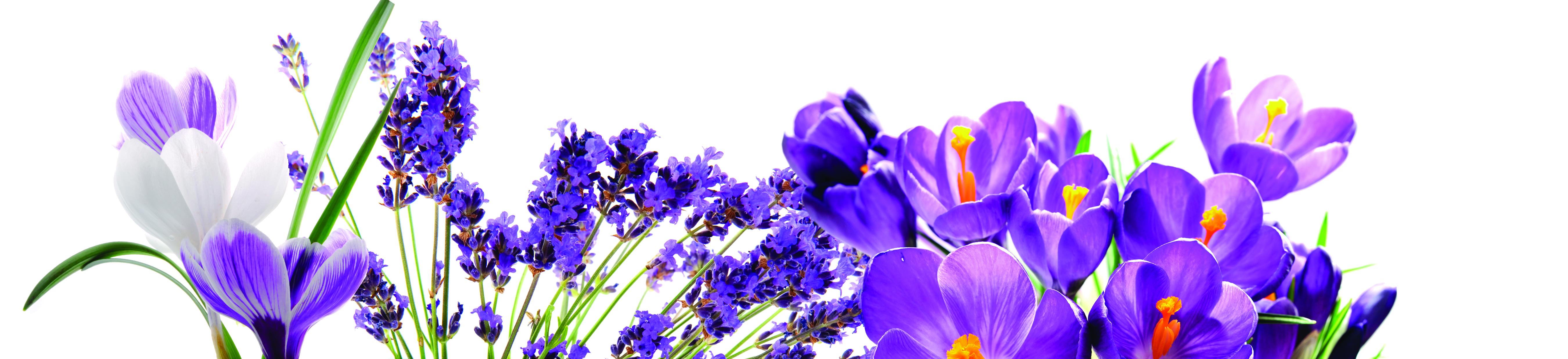 catalogue_bande_fleursmauves