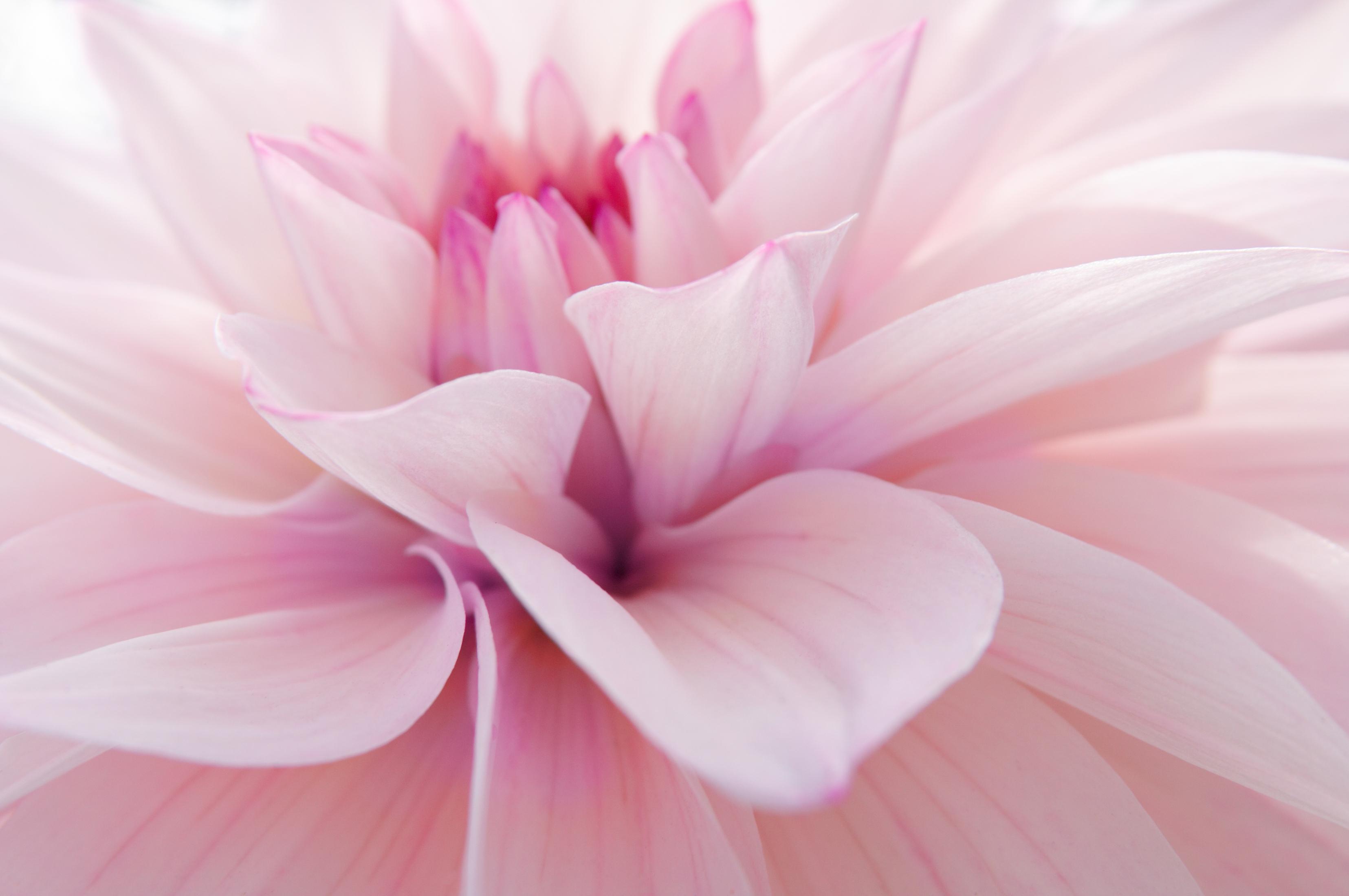 shutterstock_7632457_fleursdouces
